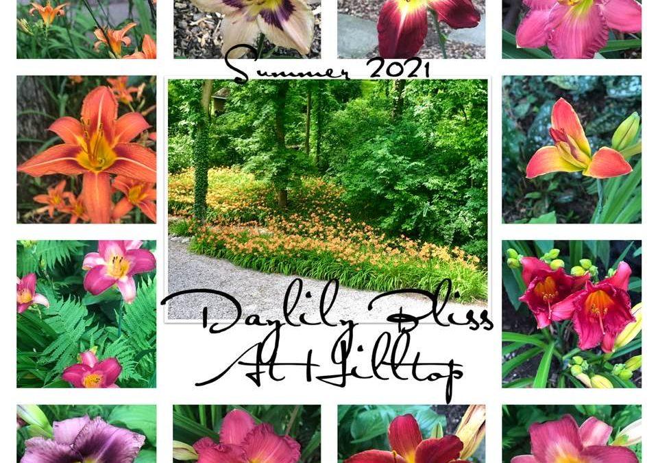 Lilies of summer!